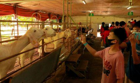 Passers trải nghiệm mô hình Working Farm tại trang trại giáo dục Dê Trắng